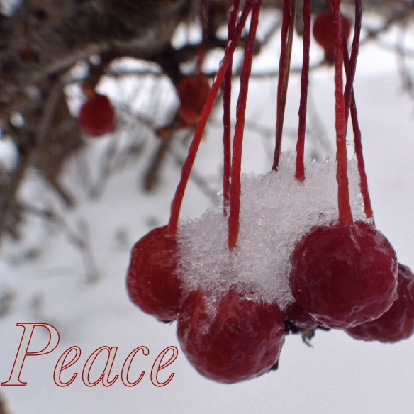 Peace Berries