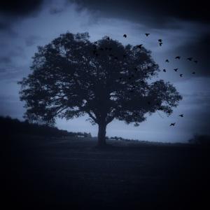 Judas' Tree
